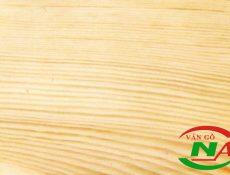 Ván coppha gỗ thông