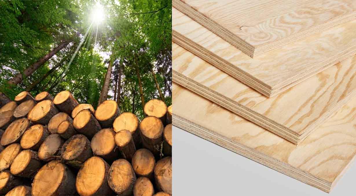 Ván gỗ thông là gì? – Ván ép gỗ thông – Giá ván gỗ thông